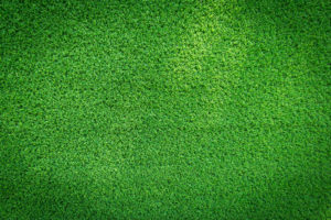Everybody loves artificial grass from Our Green Turf