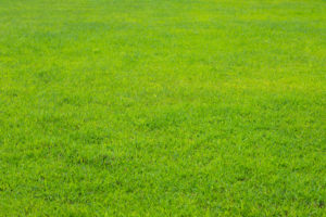 Want Artificial Grass for your Property in Colton, CA?