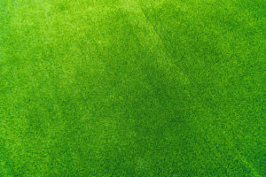 Grass You'll Love to Run and Play on