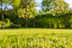 Is It Time to Remove Your Lawn?
