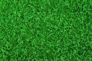 Tired of Mowing? Beautify Your Los Angeles Lawn with Artificial Turf