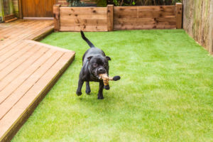 Give Your Pet a Lush Lawn to Play on with Synthetic Grass in San Diego