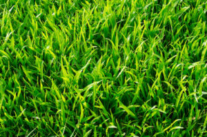 How Eco-Friendly is Artificial Grass?
