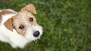 Give Your Pets the Gift of a Synthetic Lawn in Lake Elsinore CA This Holiday Season