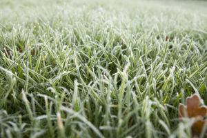 Will the Southern California Frost Damage Your Fake Grass?