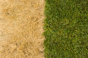 Tired of a Brown Lawn in Menifee CA? We Have a Solution