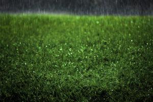 Will the Rain Harm my Synthetic Lawn in Rialto CA?