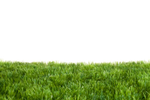 What's Better Than Healthy Grass in Orange County? Artificial Turf That Has That Healthy Glow 24/7!