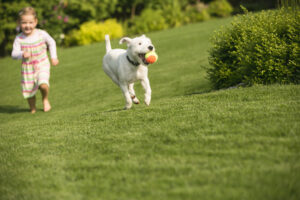 Why Pets Love Artificial Turf in Eastvale CA