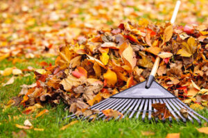 How to Maintain Your Artificial Turf in Beaumont CA During Autumn