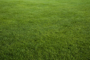 Get Greener Grass for Christmas in Riverside CA