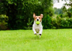 Follow These Simple Tips to Build the Perfect Artificial Grass Dog Run in Your Yard